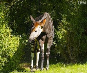Puzzle de Okapi