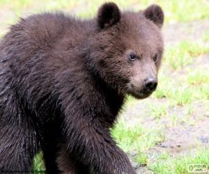 Puzzle de Osezno, cría de oso