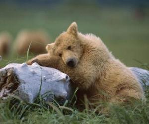 Puzzle de Oso descansando tronco