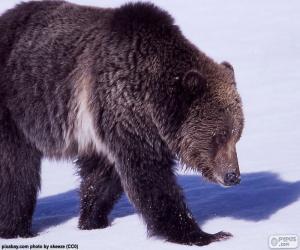Puzzle de Oso grizzly