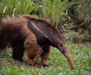 Puzzle de oso hormiguero