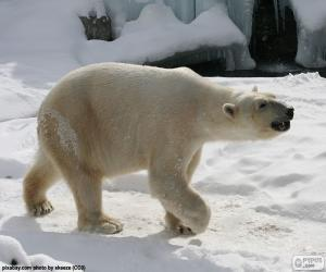Puzzle de Oso polar
