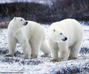 Puzzle de Osos polares