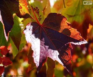 Puzzle de Otoño en la viña