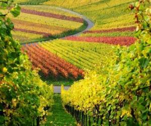 Puzzle de paisaje de otoño en la Viña