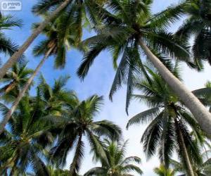 Puzzle de Palmeras tropicales