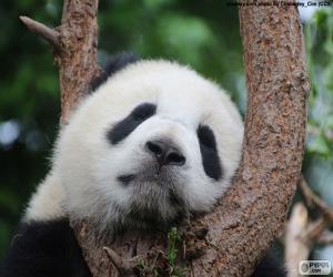 Puzzle de Panda durmiendo