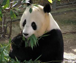 Puzzle de Panda gigante