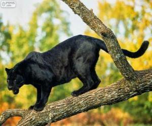 Puzzle de Pantera negra en una rama de un árbol
