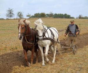 Puzzle de Payés labrando con caballos