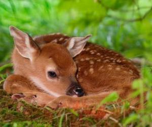 Puzzle de pequeño bambi