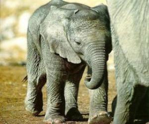 Puzzle de Pequeño elefante junto a su madre