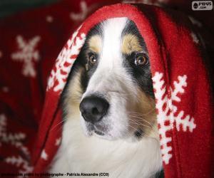 Puzzle de Perro en Navidad