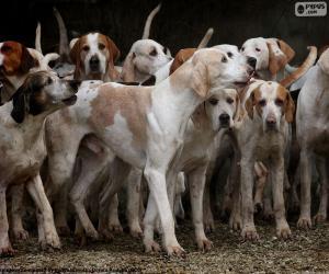 Puzzle de Perros de caza