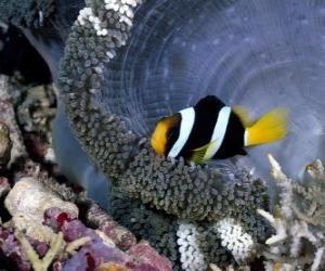 Puzzle de Pez en el fondo del mar