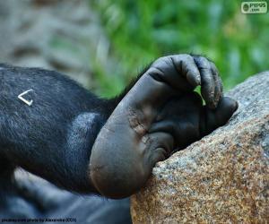 Puzzle de Pie de gorila
