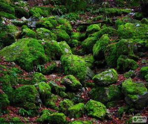 Puzzle de Piedras cubiertas de musgo