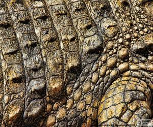 Puzzle de Piel de cocodrilo