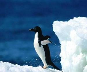 Puzzle de Pinguino sobre la nieve de la Antártida o Antártica
