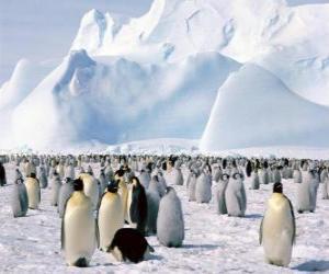 Puzzle de Pingüinos