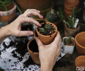 Puzzle de Plantar un cactus