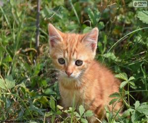 Puzzle de Precioso gatito