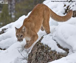 Puzzle de Puma caminando