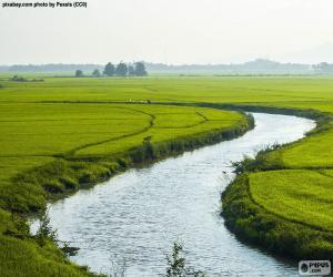Puzzle de Río entre campos de arroz
