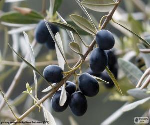 Puzzle de Rama de olivo negro