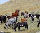 Manada de caballos salvajes