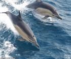 Dos delfines saltando
