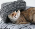 Gato y bufanda