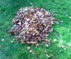 Recogiendo las hojas caídas