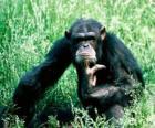 Mono sentado en el suelo