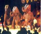 Elefantes adiestrados