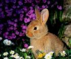 Conejo entre flores