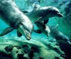 Grupo de delfines nadando en el mar