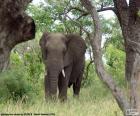 Elefante comiendo hierba
