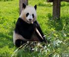 Oso panda sentado en el suelo comiendo bambú