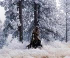 Cowboy o vaquero cabalgando