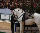 Elegante caballo con ornamento