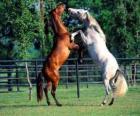 Dos caballos encabritados