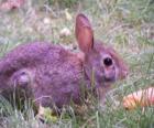 Conejo con una zanahoria