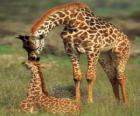 Família de jirafas
