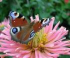 Preciosa mariposa con las alas completamente abiertas
