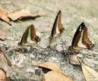 Mariposas sobre un tronco