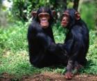 Dos mono sentados en el suelo