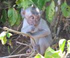 Pequeño mono