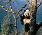 Oso panda en un árbol