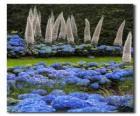 Hortensias y flores exoticas